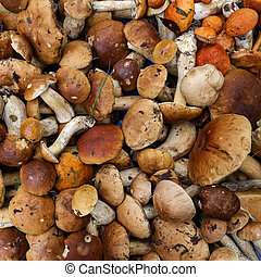 background from a variety of wild mushrooms