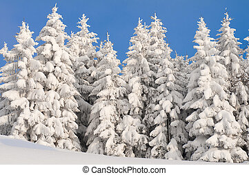 winter scene with ice and snow - winter scene and landscape...