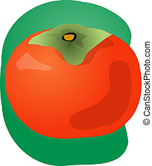 Persimmon fruit illustration - Sketch of whole fresh...