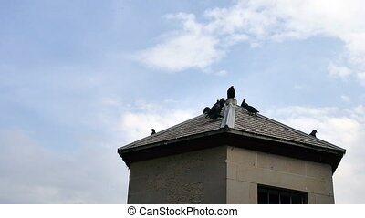 pigeons on roof - HD 1080p - Pigeons use a roof top of...