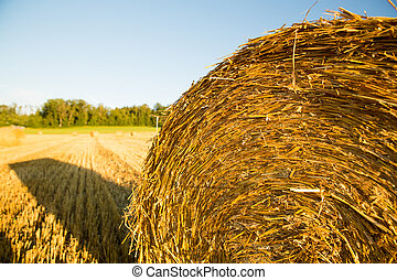 Hay bales on a field - Hay bale on a harvested field in...