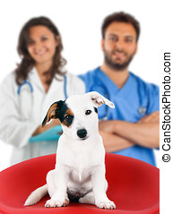Two veterinarians with a Jack Russell on white background