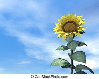 Sunflower and sky - 3D render - Close up on one sunflower...