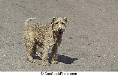 old homeless dog