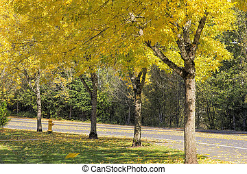 Falling Leaves from Neighborhood Beech Trees - Yellow...