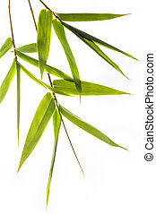 bamboo leafs isolated on white