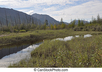 Landscape marshy floodplain of the river - Mountain river...