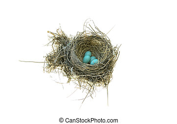 Robin's Bird Nest - Robins nest with 4 eggs in it. Isolated...