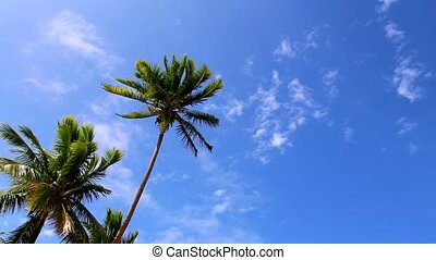 Tropical palms and blue sky - Palm trees and blue sky with...