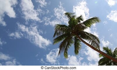 Blue sky and palm tree - Sunny tropical day with blue sky...