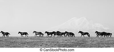 Herd of horses on a summer pasture. Elbrus, Caucasus,...