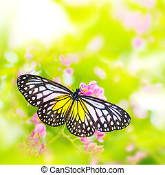 Butterfly on flower - Butterfly. Parantica aspasia (Yellow...