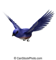 Eastern Bluebird - 3d digital render of an eastern blue bird...