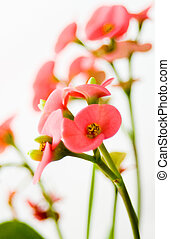 Little pink flowers - Lovely pink flowers on white...