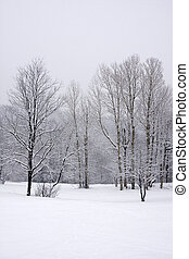Trees in Snow Covered Field