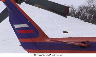 Brown bear (Ursus arctos), Helicopter