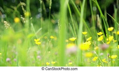 Wild flowers - HD1080: Wild flowers blooming camera motion...
