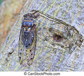 cicada insect on the tree