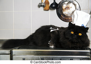 Cat lay on stove with cook hat - Male cat lay on stove with...