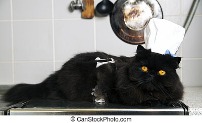 Cat lay on stove with funny look - Black cat lay on stove...
