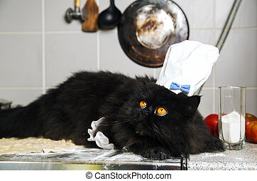 Cat on mealy stove with terrified look - Black cat on mealy...