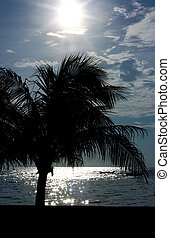 Tranquil scene - Seascape with palms in dusk