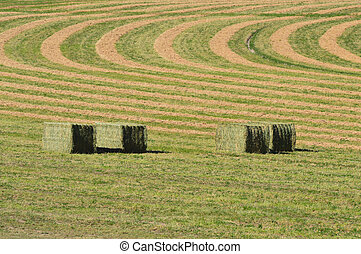 Hay Bales in Field - Large hay bales in field with cut hay...