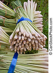 Pile of Lemon Grass