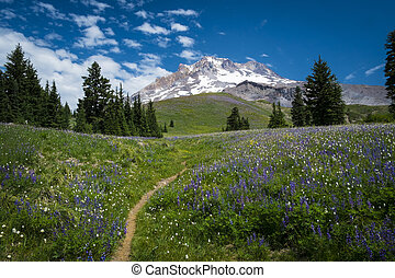 Hiking trail on slopes of Mount Hood, Oregon Cascades -...