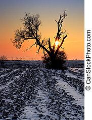 Winter alone tree on field