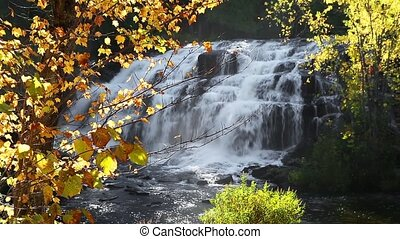 Autumn Leaves and Cascade Loop - Loop features colorful fall...