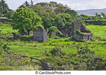 OConnell Homestead Ireland - The ivy covered ruins of Carhan...
