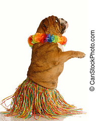 hula dancer - english bulldog dressed as a hula dancer...