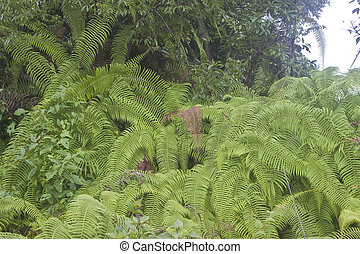Rain forest with a fern in Sikkim, India