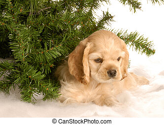 puppy under tree in winter - american cocker spaniel puppy...