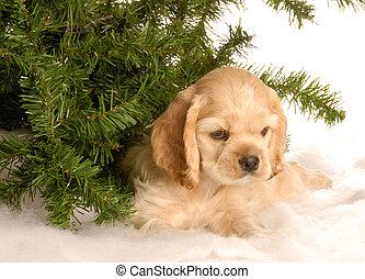 puppy under tree in winter - american cocker spaniel puppy...