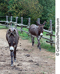 pair of donkeys observe the photographer