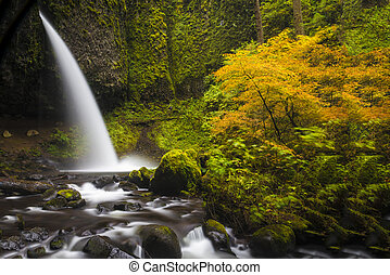 Ponytail falls, autumn, Columbia Gorge, Oregon - Ponytail...