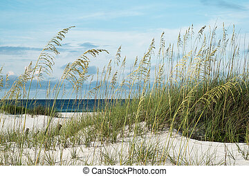 Florida Beach with Sea Oats - Sea oats and native dune...