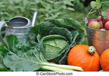 säsongbetonad, grönsak, Trädgård