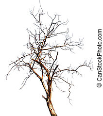 樹, 被隔离, 死, 高, 背景, 白色, 決議