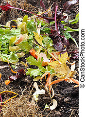 compost - various waster for composting