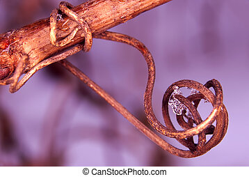 Helical Vine Vegetation - Interesting helical vine in...