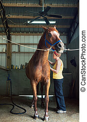 Woman Brushing Her Chestnut Gelding in the Stables