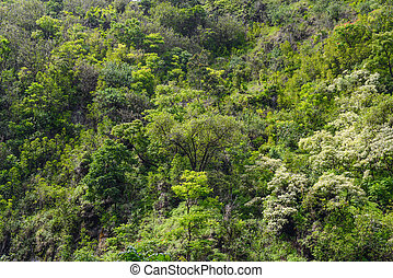 Tropical Rain Forest Background