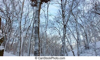 Snowy Forest Scenery Illinois - Winter wonderland at Rock...