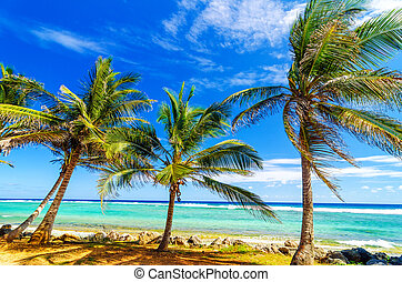 Coastal Palm Trees - Palm trees on turquoise sea on the...