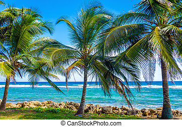 Palm Trees and Sea - Palms trees on Caribbean Sea on the...