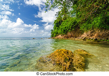 Lush Tropical Coastline - View of lush green tropical coast...