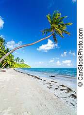 Deserted Beach and Palm Trees - Palm trees on a deserted...